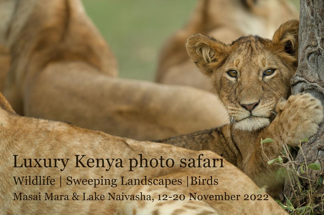 Luxury Kenya photo safari - Nov 2022